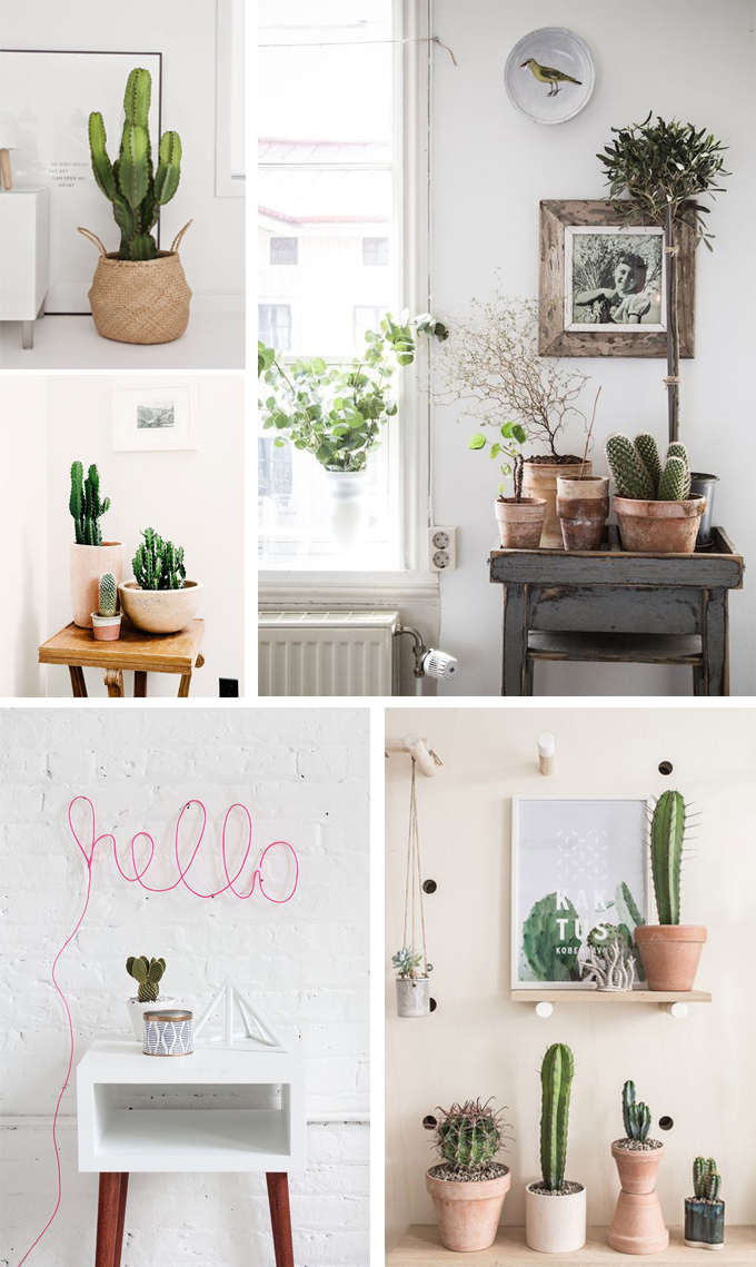 1000 images about cactus on pinterest cactus paper cactus and cactus illustration. Black Bedroom Furniture Sets. Home Design Ideas