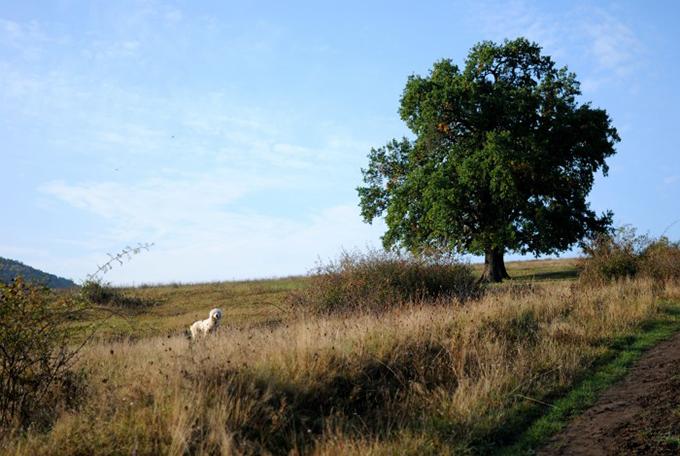rural it